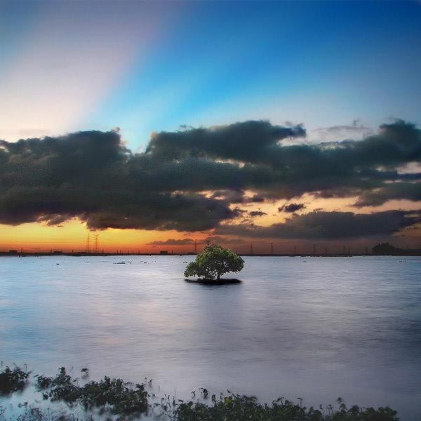 09BengaliDhaka lone tree