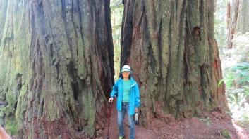 Redwood Giants 1