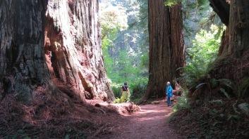 Redwood Giants 2