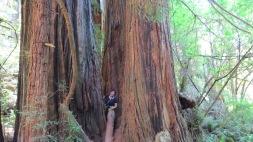 Redwood Giants 3