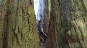 Redwood Giants 4