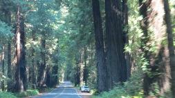 Redwood Giants 6