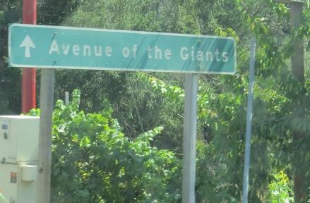 Redwood Giants 7