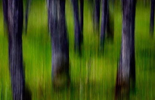 Men as Trees