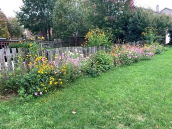 2021-10-27 Autumn Wildflowers